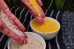800px-Golden_Rice