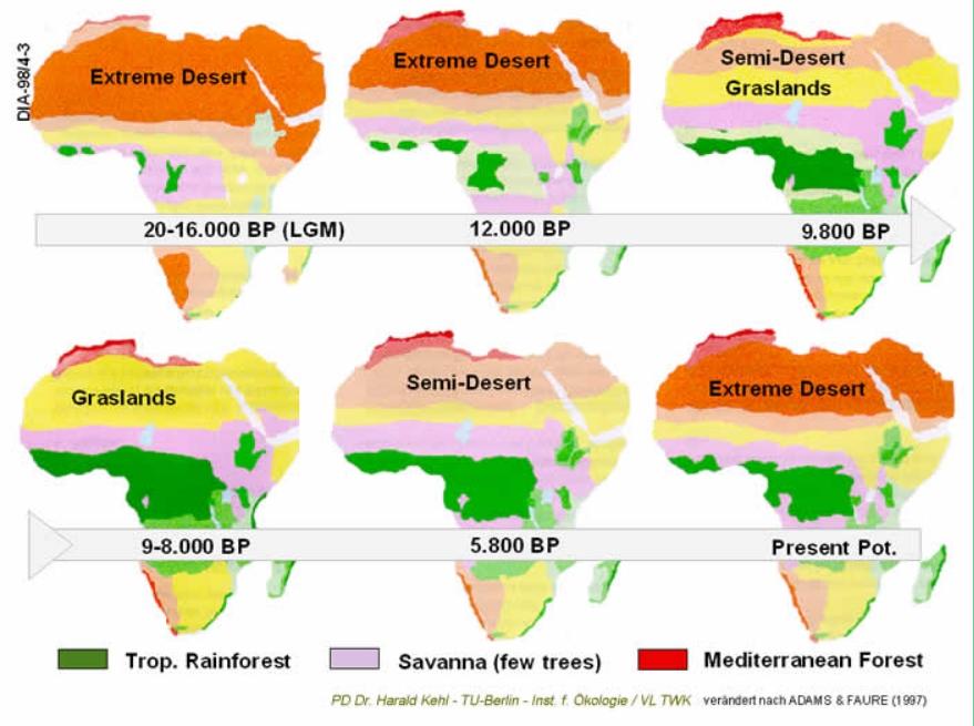 Sahara-Regenwaelder
